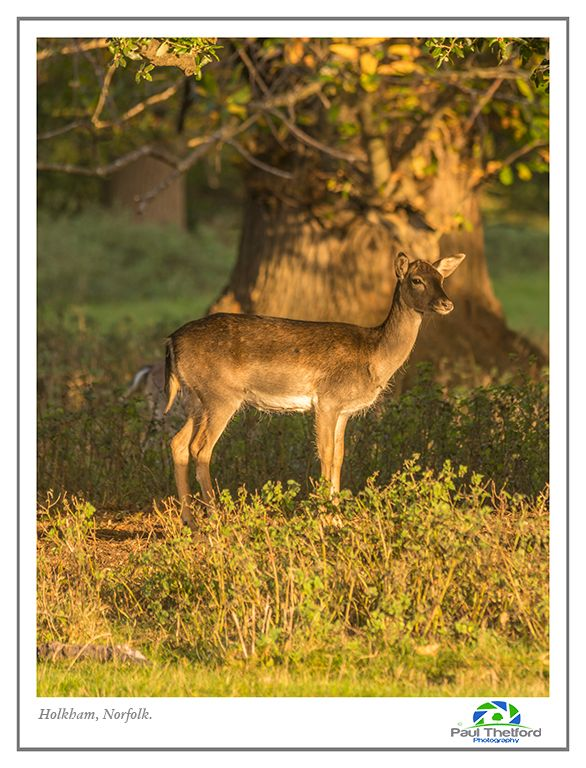 Autumn Deer 7