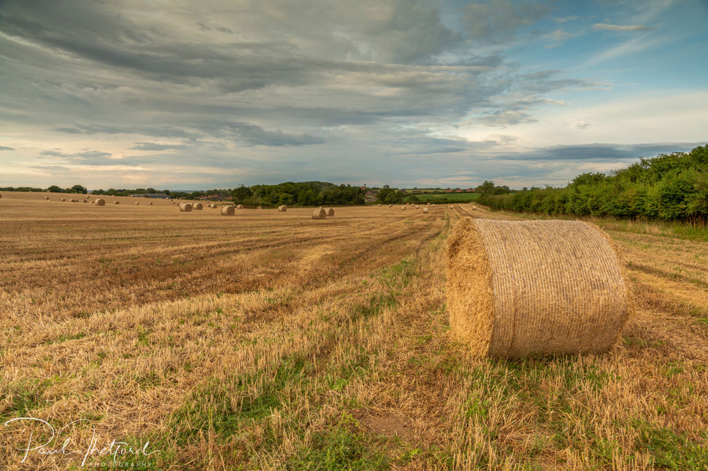 Weybourne Harvest 4