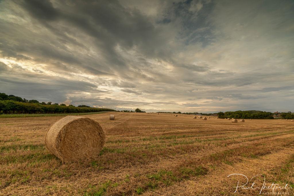 Weybourne Harvest 5
