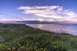 Wild Flowers and Norfolk Coast 2