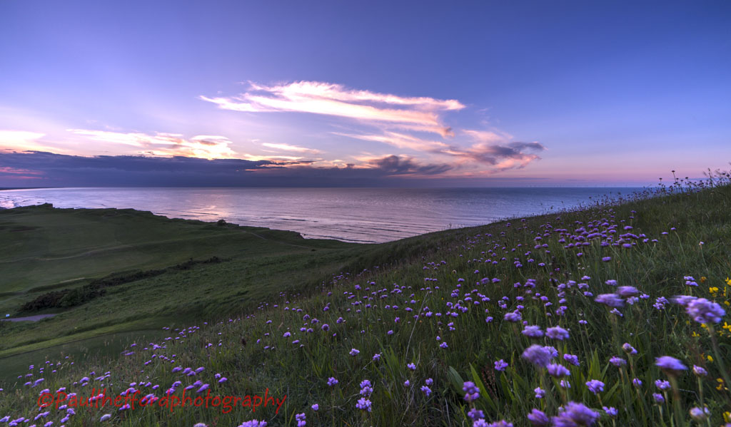Wild Flowers and Norfolk Coast 3