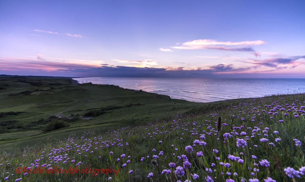 Wild Flowers and Norfolk Coast 4