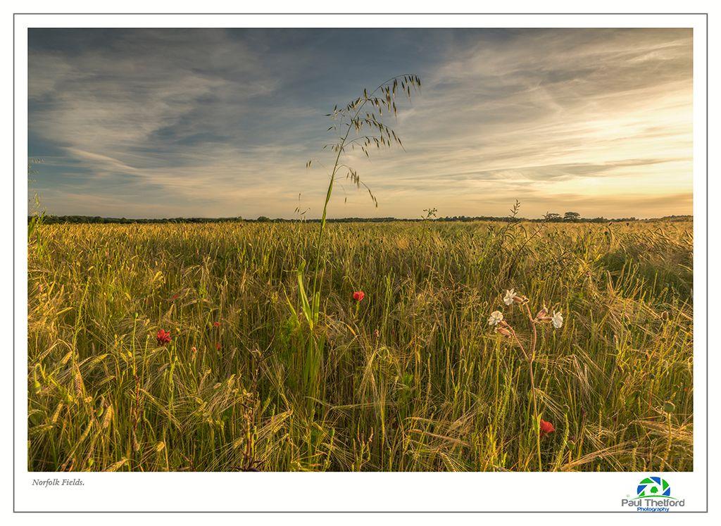 Norfolk Fields 3