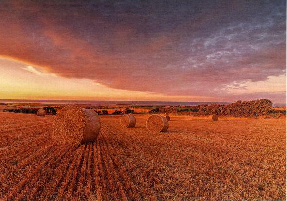 Norfolk Harvest