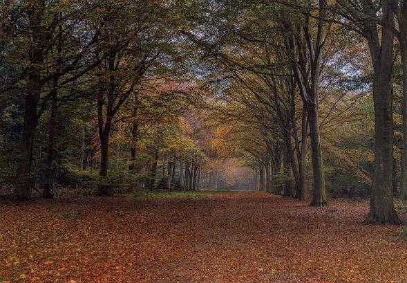 Felbrigg Autumn