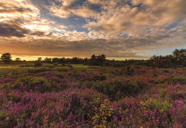 Weybourne Heath