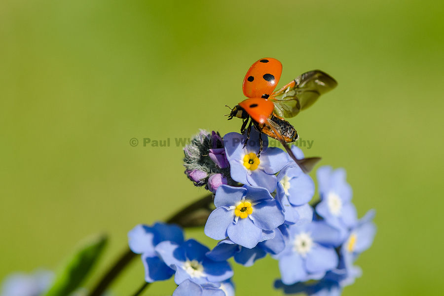 Ladybird take off