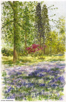 Bluebell Walk I