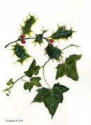 *XMAS* Holly & Ivy