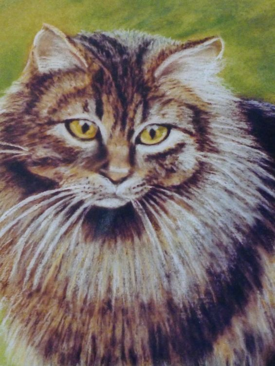 Cat Portraits in soft Pastel