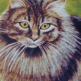 Cat Portraits in soft Pastel