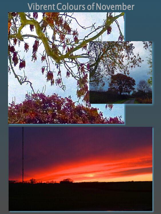Vibrant Colours of November