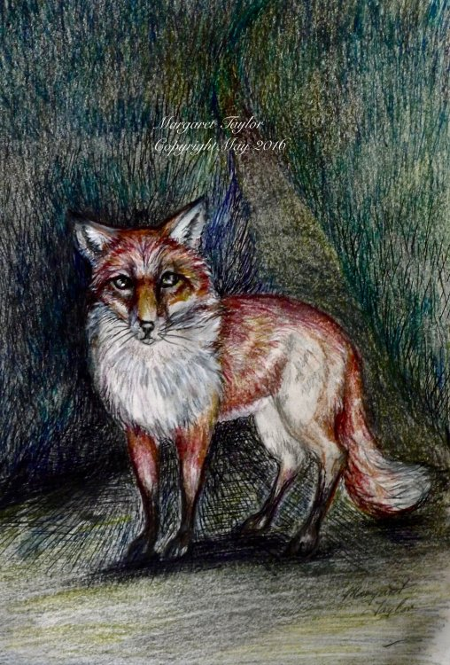 """'Mr Fox'  Prints Available £14.99 inc P&P on Gallery """"The Spring Collection"""""""