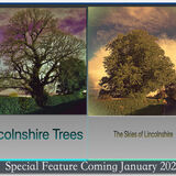 Lincolnshire Trees January 2021