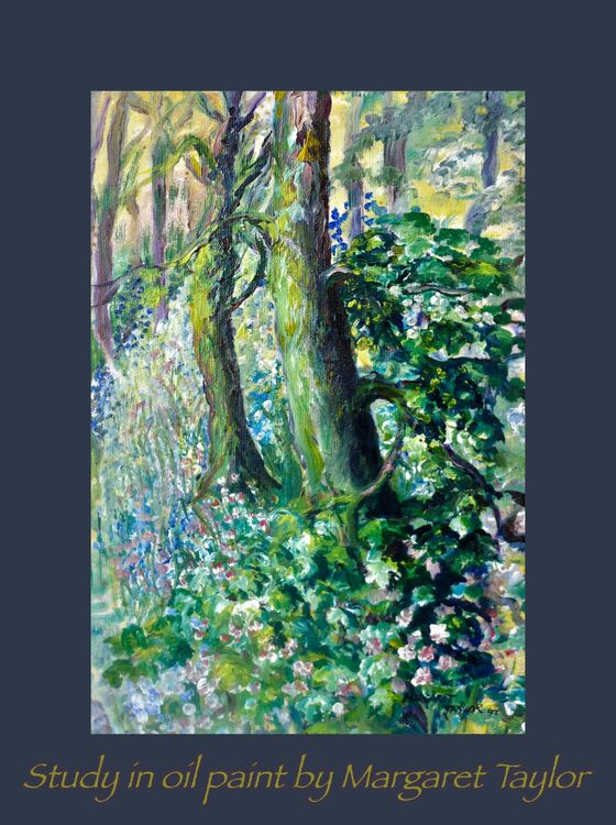 Bluebells and Campion in the Woods.