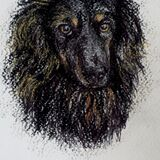 Slow Draw £25.00. A Portrait Drawing of Your Dog or Cat