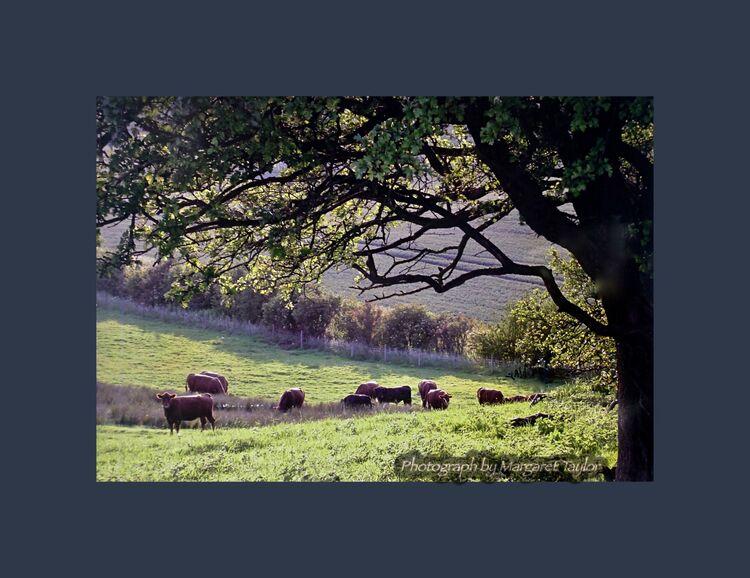 A Lincolnshire Field