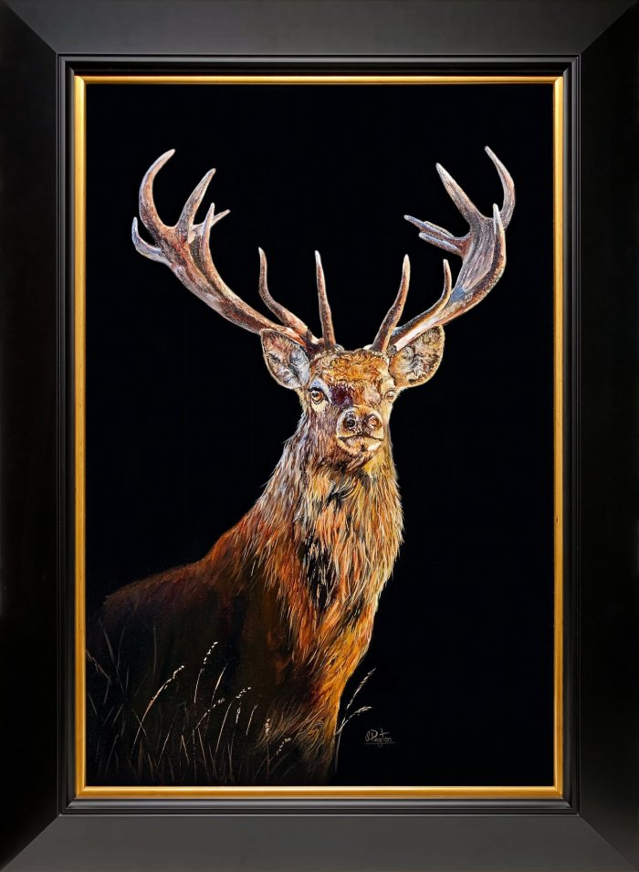 Red deer stag caught in the dawn light