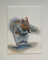 Grey Squirrel #1