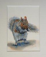 Grey Squirrel #1