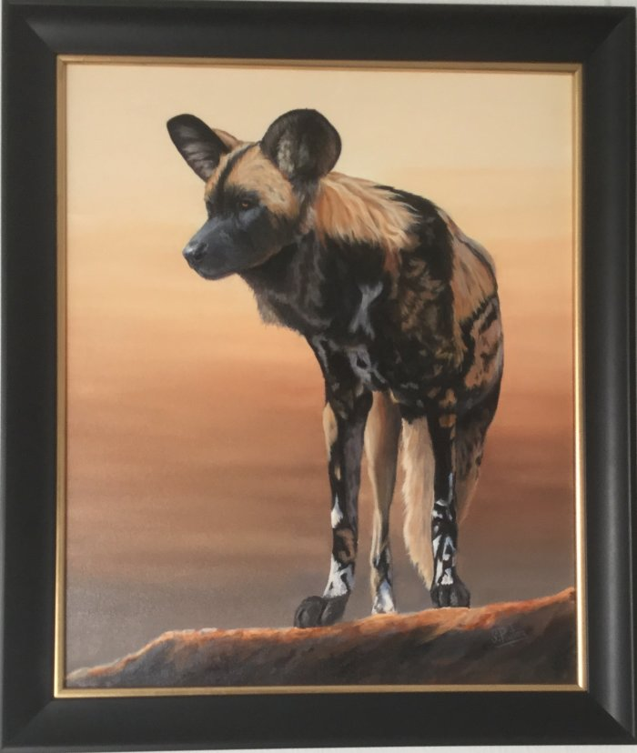 An African Wild Dog, standing looking out.
