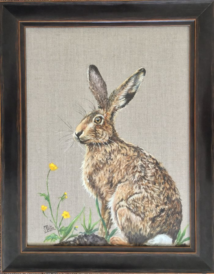 Hare on linen background sitting by a buttercup