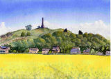 Lilleshall (Oil Seed Rape)