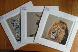 "16"" x 16"" Limited Edition Wildlife Prints"
