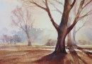 Winter Sunlight, Westonbirt