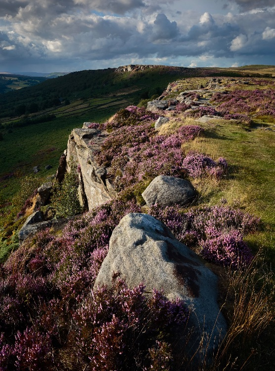 Baslow Edge Heather