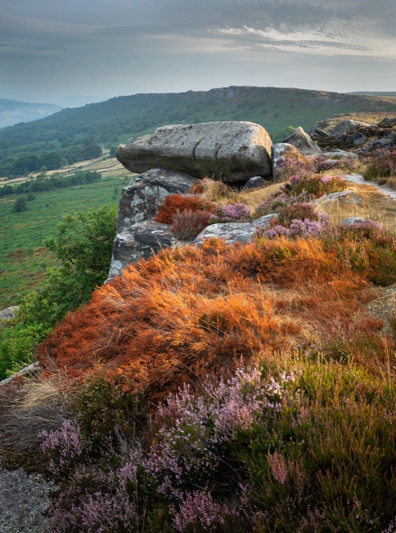 Baslow Edge, August 2018, Drought hit heather