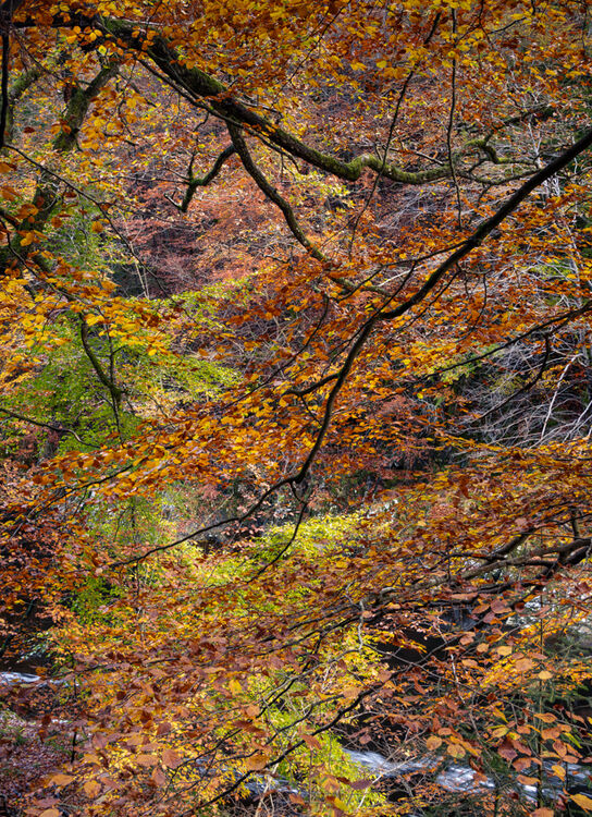 Autumn, Birks of Aberfeldy