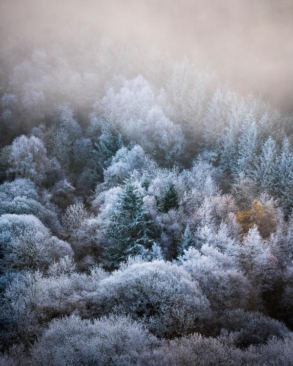 Loch Oich forest in hoar frost