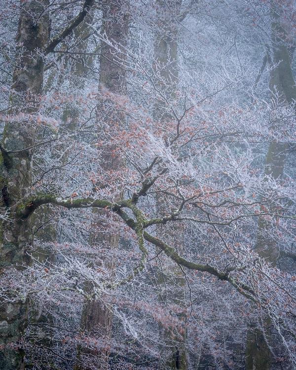 Loch Oich hoar frost
