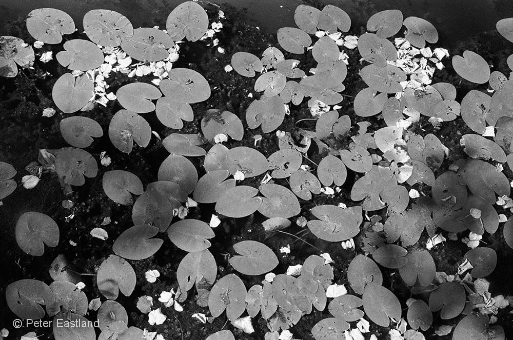 Water lilies and Autumn leaves, France<br><br><br><br><br><br><br><br>
