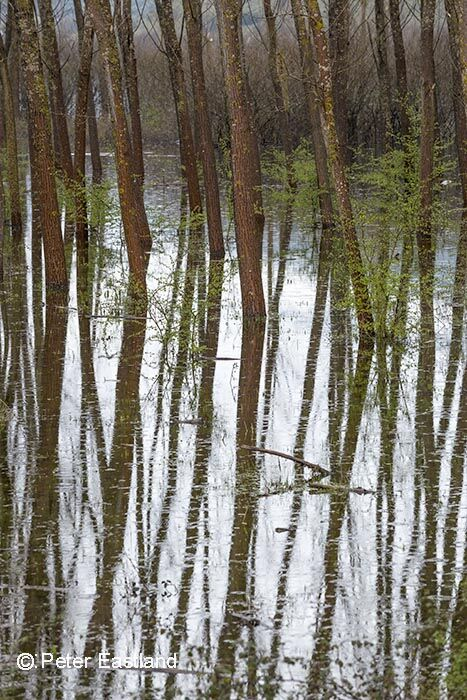 Flooded trees on the Achelous River in Aetolia-Acarnania, Western, Greece.<br><br><br><br><br><br>