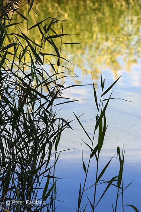 Water reeds on Mikri Prespa lake, Macedonia, Northern Greece.<br><br><br><br><br><br>