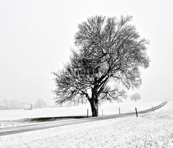 heart tree in snow