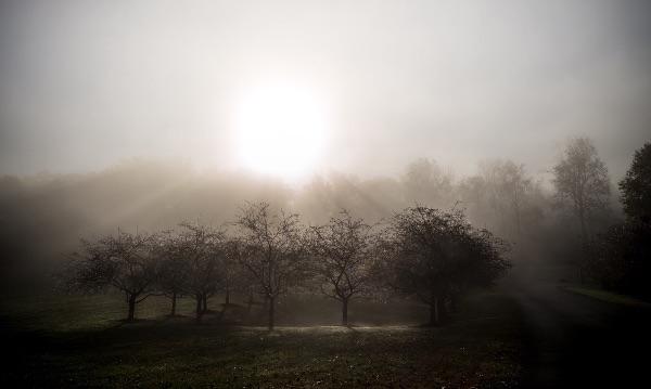 Merry Go Round Farm Sunrise