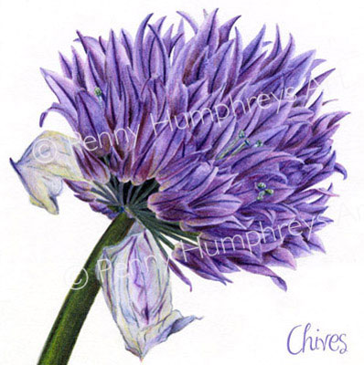 Chive Card