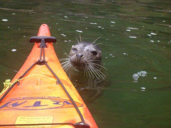 Sea Kayaking 2014