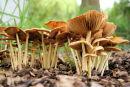 Fungi at Bonaly Country Park