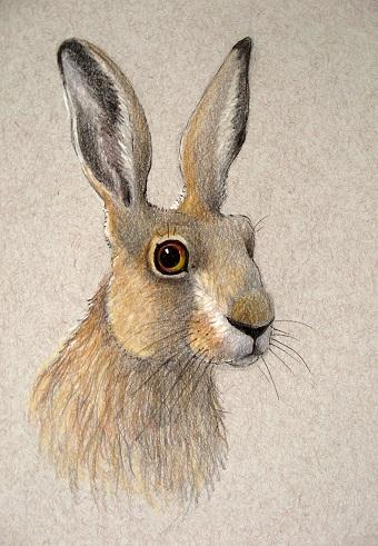 Simon Hare