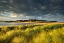 Swaying Marram Grass Alnmouth
