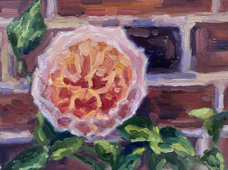 The Rose from Hampton Court Gardens - £60