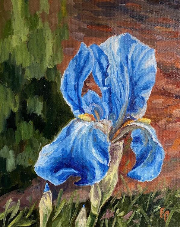 Blue Iris - £350