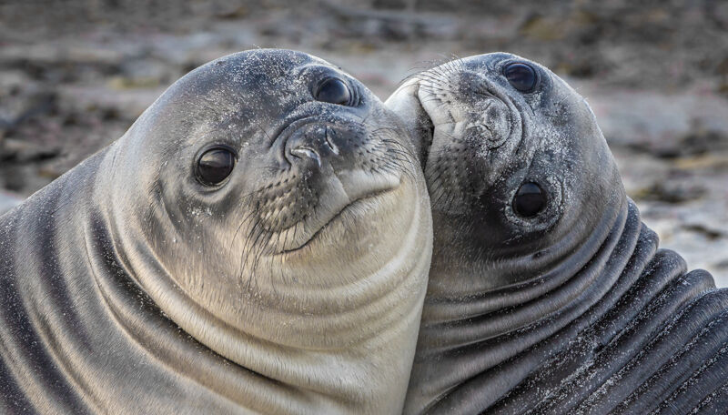 Seal pups together (Score 10)