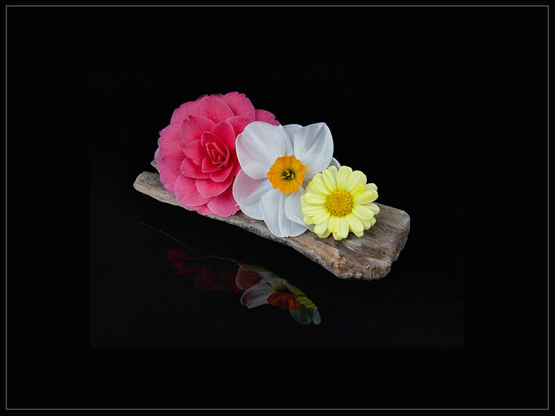 3rd= Spring Flowers on Driftwood
