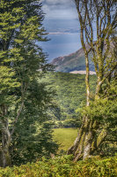 Through the Trees to Porlock Bay