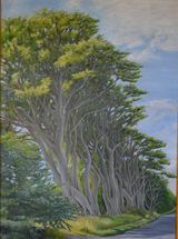 Row of Beech Trees